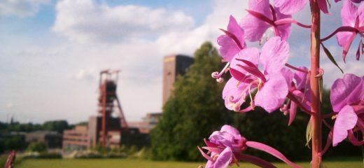 Nordsternpark Gelsenkirchen, Foto: www.flickr.com - Daniel Zimmel